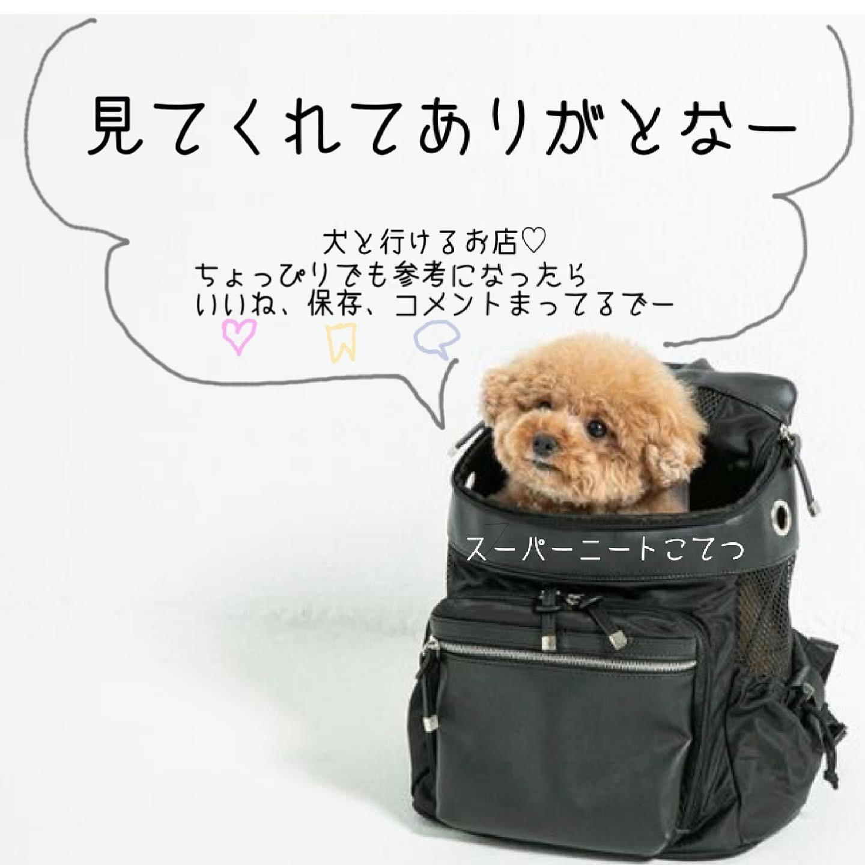MIYASHITAパークで犬と一緒にタイごはんの画像 (5枚目)
