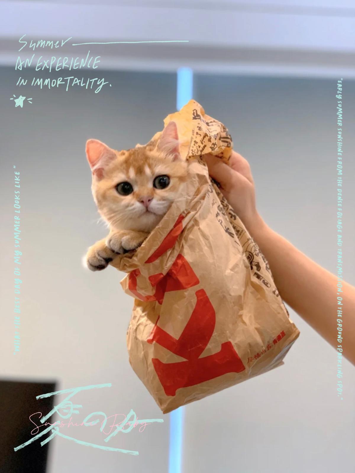 KFC take away😽😽😽の画像 (2枚目)