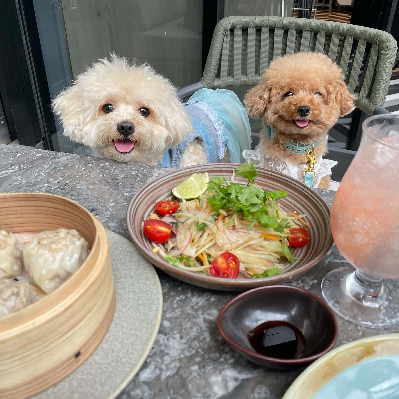 MIYASHITAパークで犬と一緒にタイごはんの画像 (2枚目)
