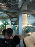 普通の動物園や水族館に飽きたらニフレルに行こう!動物を間近で見られるぞ!の画像