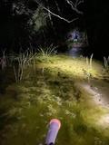 【沖縄・国頭村】自然に囲まれて過ごす贅沢時間|ナイトハイク。灯りは手元の懐中電灯だけ。の画像