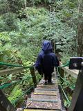 【沖縄・国頭村】自然に囲まれて過ごす贅沢時間|朝の森林ツアーの画像